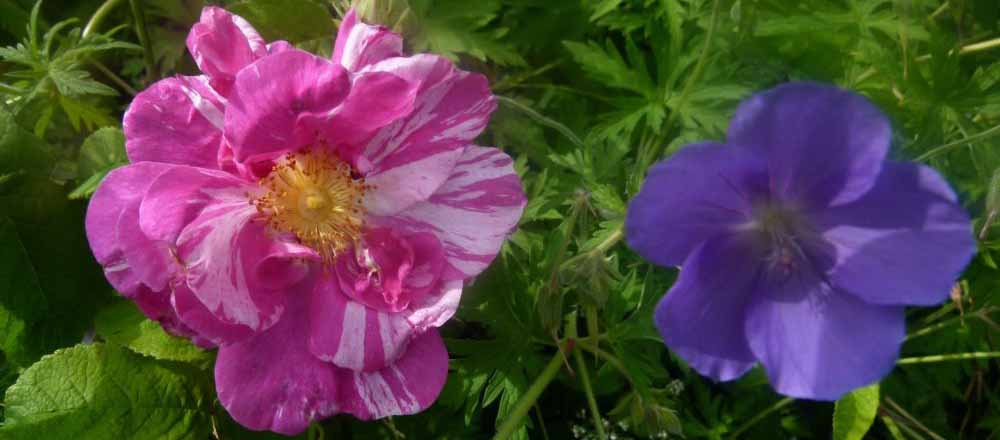 https://www.shbbs.fr/index.php?option=com_content&view=article&id=182:un-drole-de-printemps-pour-passion-jardin&catid=35〈=en&Itemid